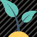 foliage, leaves, plant, sapling, seedling
