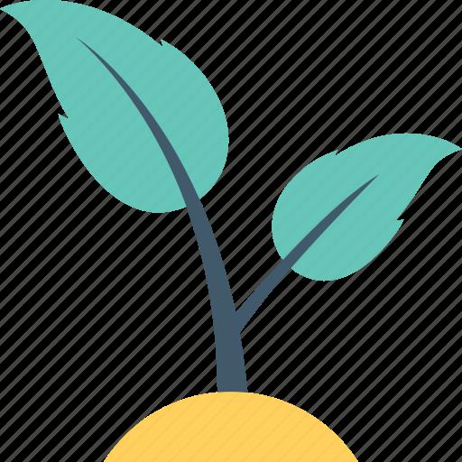 foliage, leaves, plant, sapling, seedling icon
