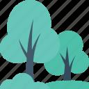 ecology, foliage, forest, shrub tree, tree