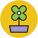 flower, flower in pot, oakleaf hydrangea, pot flower icon