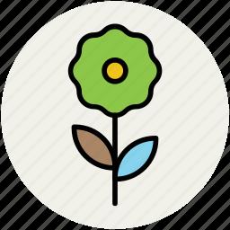 daisy, daisy stem, flower, flowering stem, nature, stem icon