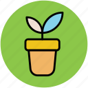 flower, gardening, growth, nature, plant pot, sapling icon