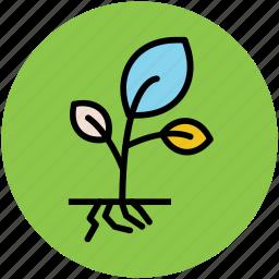 gardening, growing, plant, plant growing, planting, sapling icon