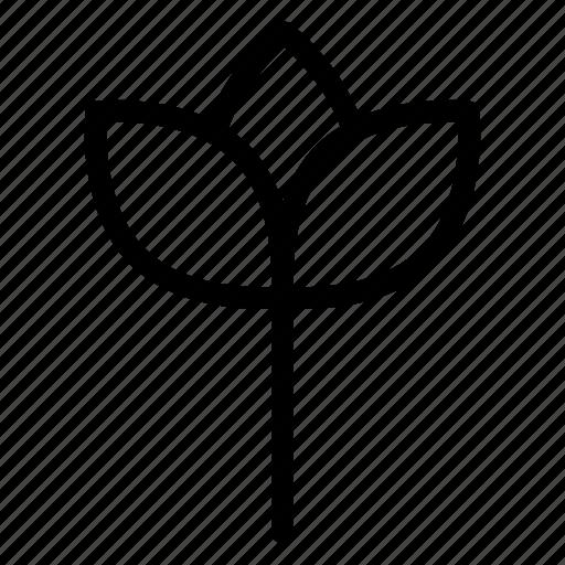 camomile, flower, garden, nature icon