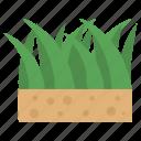 nature, grass, lawncare, weeds, yards, green grass