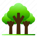 forest, landscape, nature, rain, tree, tropical, view