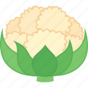 brassica, califlower, cauliflower, leaves, oleracea, vegetable icon