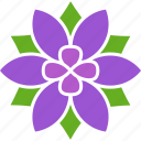 flower, petals, blossom, six, purple, violet, bloom icon