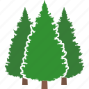 evergreen, forest, tree, pine, trees, conifer, jungle