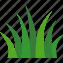 grass, green, poaceae, gramineae, grasses, grassland, turf