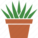 aloe, aristata, houseplant, plant, potted, succulent, succulents icon