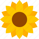 flower, helianthus, ligules, petals, sun, sunflower, yellow