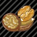 brown, cartoon, closeup, diet, nut, walnut, walnuts icon