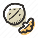 food, healthy, nut, protein, snack, walnut icon