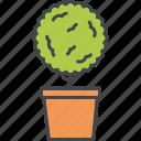 boxwood, decoration, garden, gardening, plant, pot icon