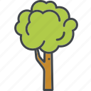 deciduous tree, garden, gardening, nature, plant, tree icon