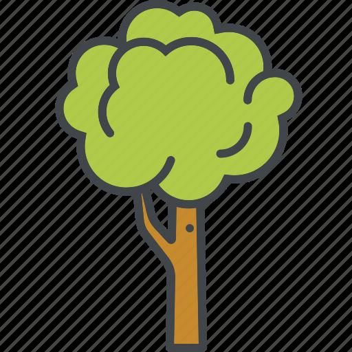 deciduous tree, garden, gardening, nature, plant, tree icon