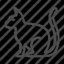 cat, pet, animal, kitten, domestic