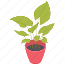 houseplant, leaves, plant, pot icon