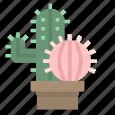 botanical, cactus, dessert, dry, plant icon