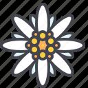 austria, bavaria, edelweiss, flower icon