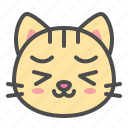cat, cute, face, kitten, pet