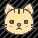 angry, cat, cute, face, kitten, pet