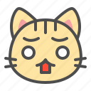 cat, cute, face, kitten, pet, surprise