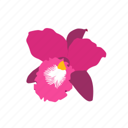 flower, orchid, pink, purple icon