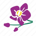branch, buds, orchid, three orchid icon