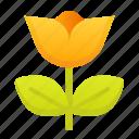 natural, beauty, flower, signaling, non toxic
