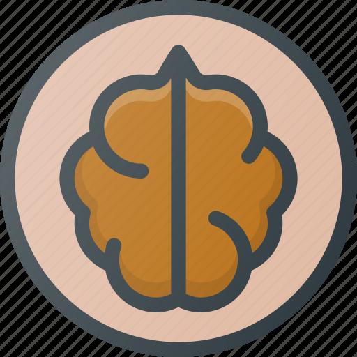 fruit, nut, wallnut icon