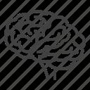 brain, brainstorming, idea, knowledge, mind, neurosurgery icon