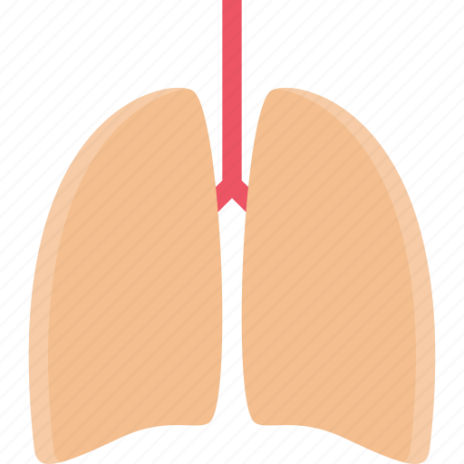 Clinic, doctor, hospital, lungs, treatment icon - Download on Iconfinder
