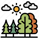 forest, nature, pine, tree, woods