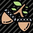 acorn, forest, fruit, nut, oak icon
