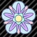 decoration, floral, flower, mandala, ornament