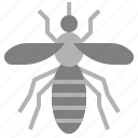 bug, insect, mosquito