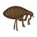 bug, flea, harmful insect, hexapod, insect, pest icon