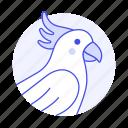 animal, birds, cockatoo, crested, parrot, pet, sulphur, white