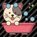 animal, bath, cat, shower