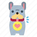 accessories, animals, collar, dog, pet