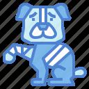 bandaged, dog, medical, pets