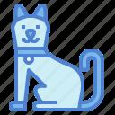 animale, cat, mammal, pets
