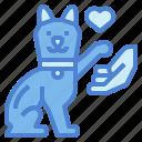 animals, cat, hand, lovers, pets