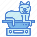 cat, pets, scale, weight