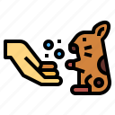 animals, hamster, love, pets