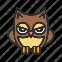 bird, night owl, owl, pet, shop