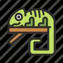 iguana, pet, reptile, shop icon