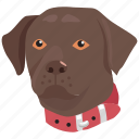 collar, trained, head, pet, canine, dog icon